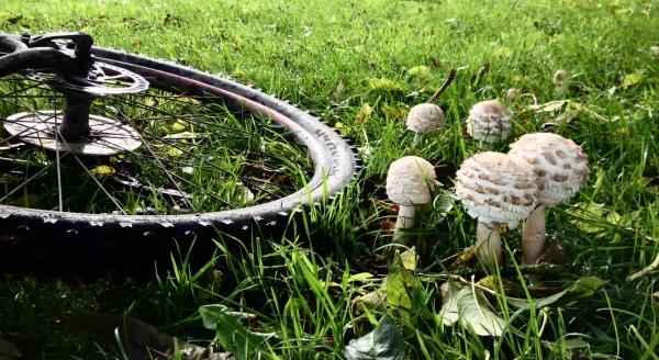 Bikes and Nature