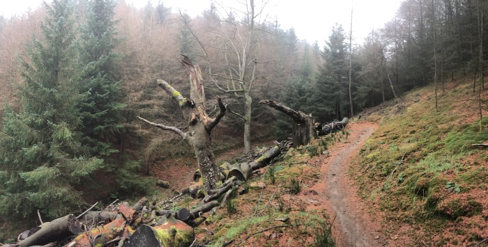 Cafall Trail Cwmcarn